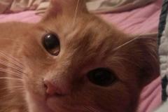 Loving Dexter