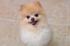 Cutie Pie Peanut
