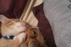 Morris Sleeping with his friend Bunny