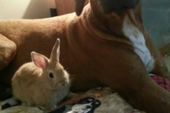 Gracey Mae and her Bunny